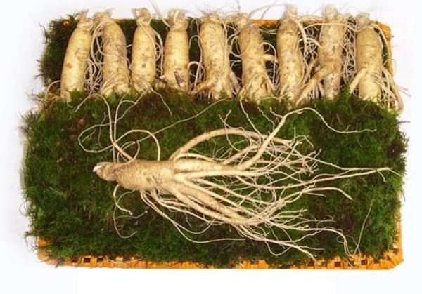 nhân sâm củ tươi Hàn Quốc loại hầm gà