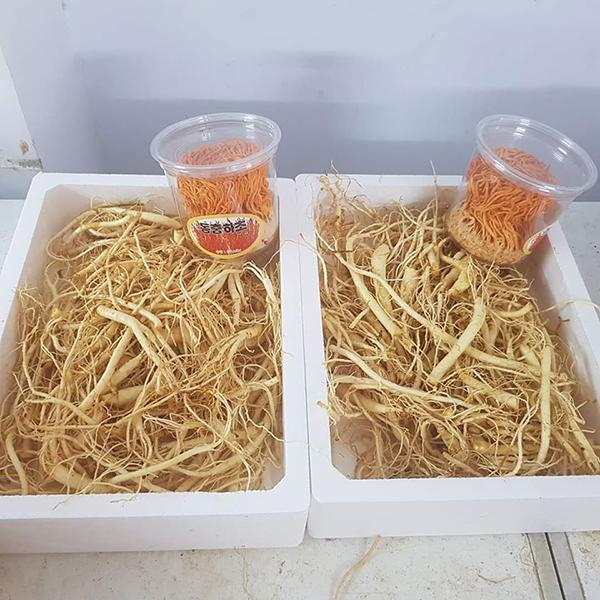 rễ sâm hàn quốc loại 1kg