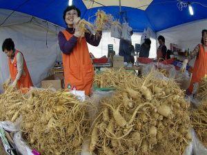 Nhân sâm Hàn Quốc thu hoạch khi sâm được mấy năm tuổi