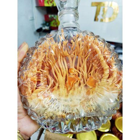 Đông trùng hạ thảo việt nam nuôi cấy trong chai